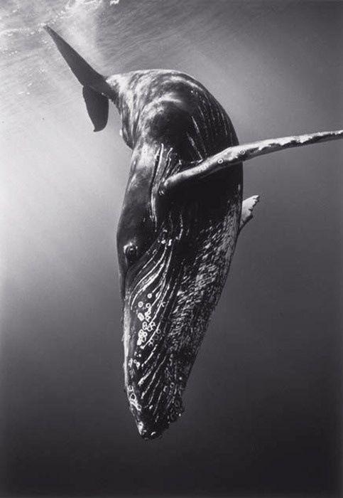 モノクロのクジラ
