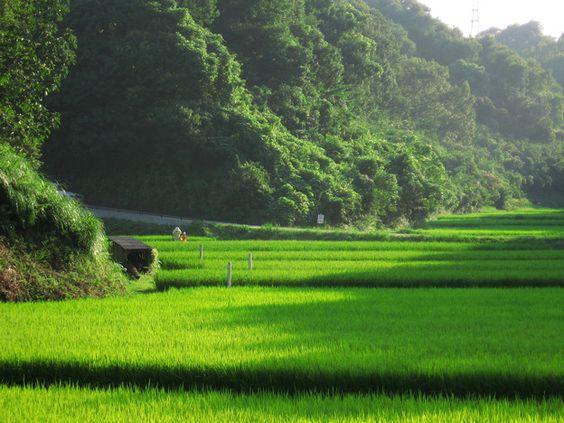 フォト蔵で青空白帆さんが共有している写真「山間の田・夏:2007_0819_A540_0071」です。フォト蔵はスマートフォンやデジタルカメラで撮った写真を簡単に投稿・共有できるフォトアルバムサービスです。