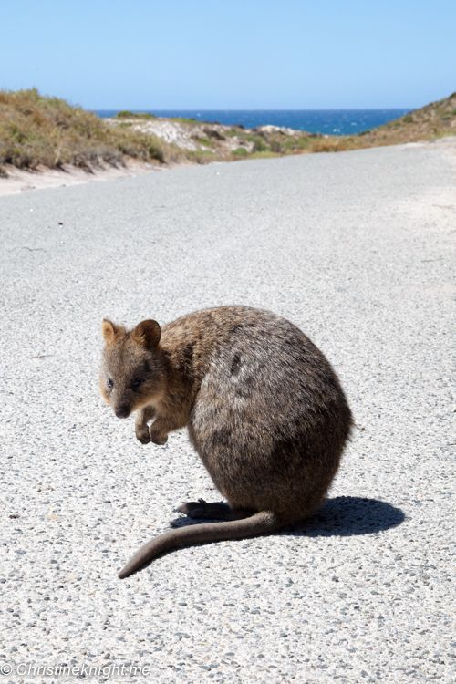 Rottnest Island Day Trip Perth Western Australia Australia