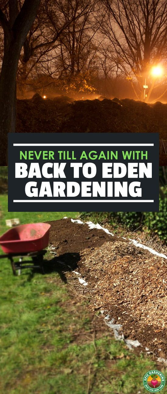 Don T Use The Tiller Try The Back To Eden Method Instead