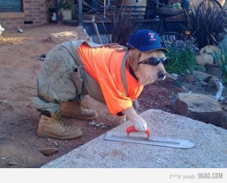 When a dog is working.