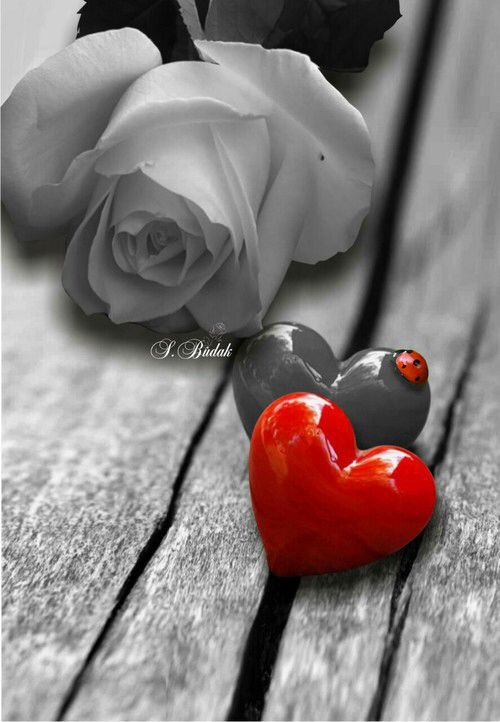 Http Weheartit Com Entry 233442290 Love Heart Images Heart Wallpaper Flower Heart