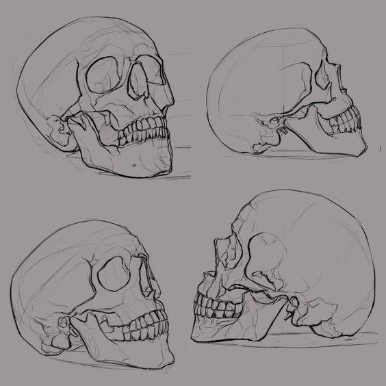 Skeleton Face Line Drawing : Bosquejo del cráneo calaveras and portadas de libros on