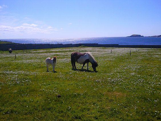 shetland bressay