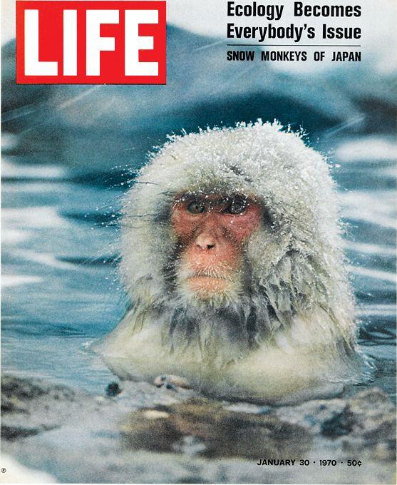 LIFE 1970 - Japan Snow Monkey