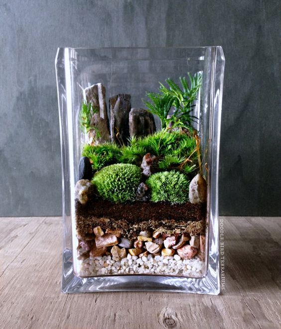 Bring nature indoors with this micro garden landscape. It features mini mounds of moss and palm-tree shaped Selaginella plants with for bonsai-like: