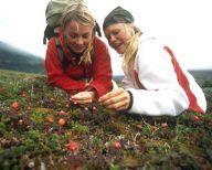 Natures Best - Singles summer week in Lapland