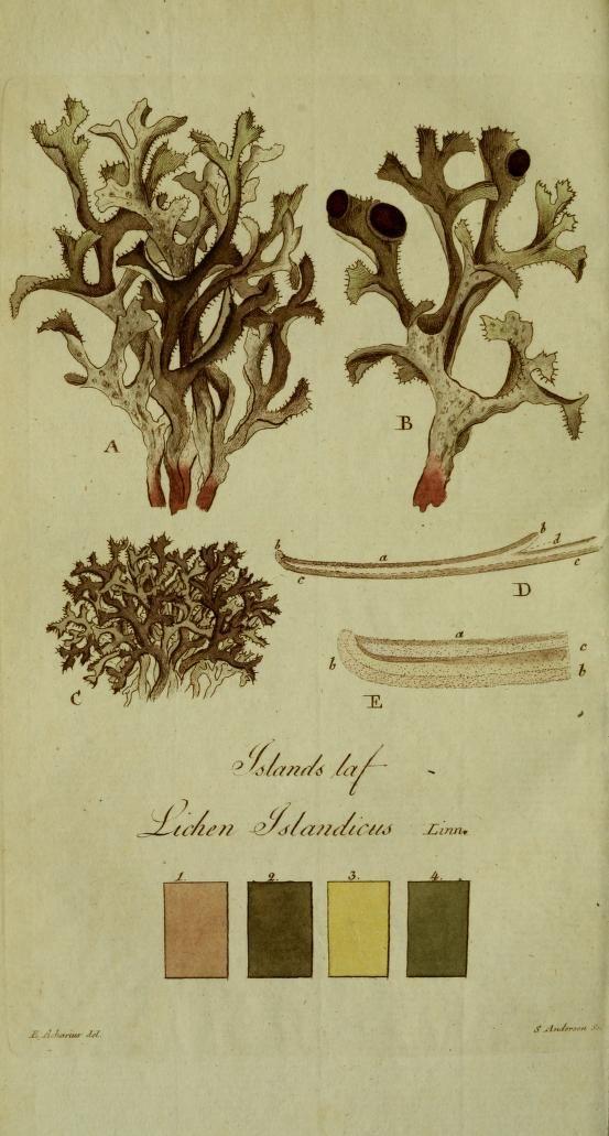 Svenska lafvarnas färghistoria by Johan Peter Westring. Published 1805-[09]