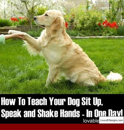 Tips For Potty Training Older Dogs And Pics Of How To Train Your Dog To Go To The Toilet In One Spot Tip 5657791 Dogtrainingbiti Dog Training Dogs Dog Minding