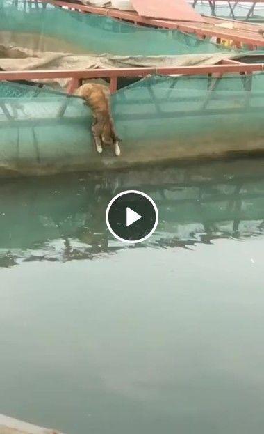 Esse gato é o verdadeiro pescador.