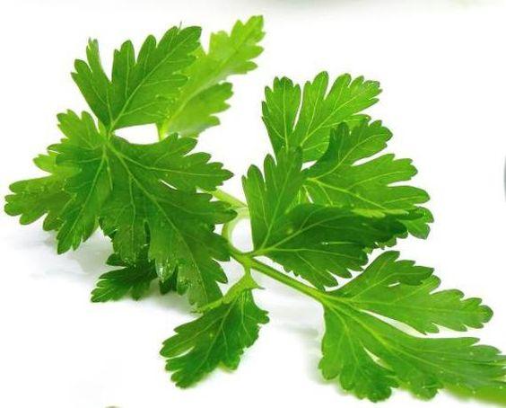 Parsley Google Search Herbs Parsley Handy