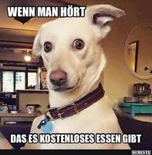 Bildergebnis Fur Lustige Hunde Bilder Mit Spruch Funny Animal Photos Cute Dogs Funny Animals