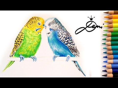 Wellensittiche Zeichnen Vogel Malen How To Draw A Budgerigar Bird Kak Se Risuva Papagalche Youtube Vogel Zeichnen Vogel Malen Kunstzeichnungen