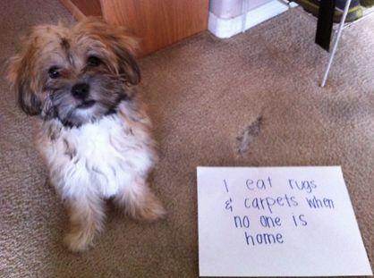 dog shaming {so funny!}