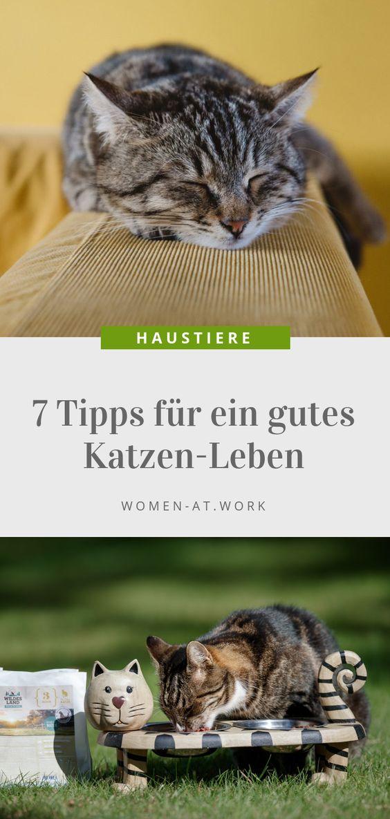 """Sie sind der Deutschen liebstes Haustier – die Katzen. Immerhin leben circa 8,2 Millionen Katzen bei uns. Damit hält sich jeder Zehnte einen """"Stubentiger"""". Und dem soll es richtig gut gehen. Mit den folgenden Tipps gelingt dir die perfekte Pflege deiner Katze. Und mit dem neuen Katzenfutter von Wildes Land kannst du sie auch artgerecht und ganz natürlich ernähren."""