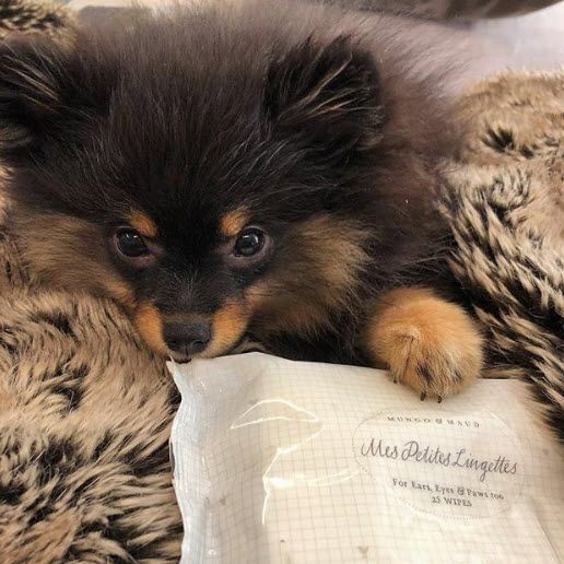 Discover Mes Petites Lingettes Wipes For Ears Eyes Paws