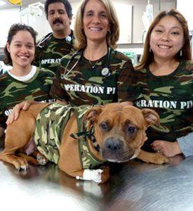 Happy Anniversary to ASPCA's Operation Pit!