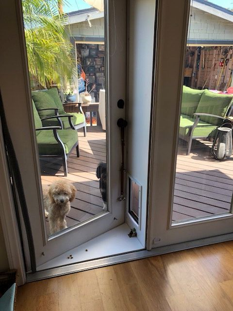Pet Door For French Doors For Sale In Tempe Az Offerup Pet Door Dog Door Large Dog Door