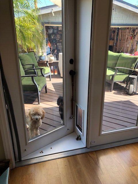 pet door for french doors for sale in