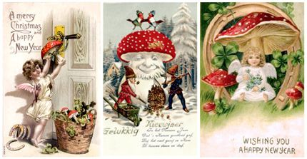 Image result for fly agaric old illustrations