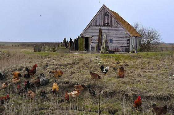 A Photo Essay of Old Barns