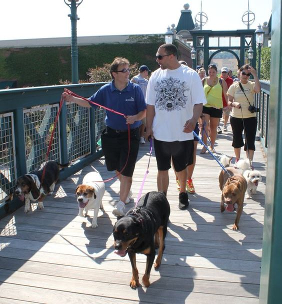 """Hundreds of dogs and their owners were at the Waterfront for the """"Pup Walk,"""" which raised money for the Western PA Humane Society and was sponsored by Panera Bread."""