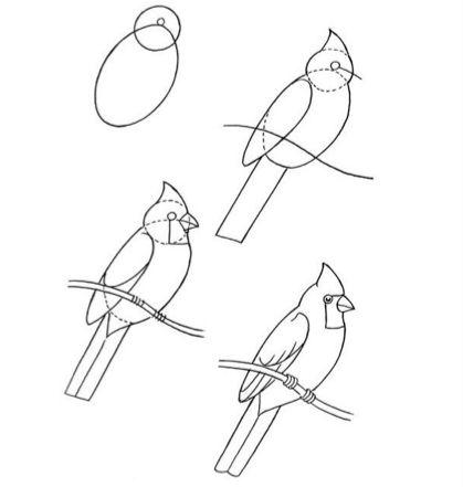Instrução para desenho infantil - Periquito/Calopsita!?