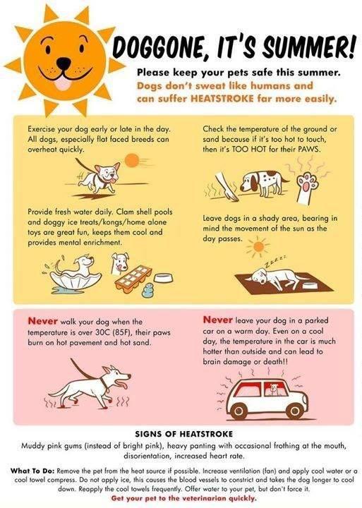 dog health tips dog care and health tips on pinterest