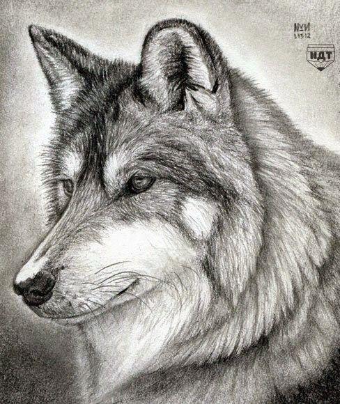 برنامج رائع جدا واحترافي في تحويل الور الى صور مرسومة بكل احترافية Painting Art Lesson Learn To Sketch Wolf Sketch