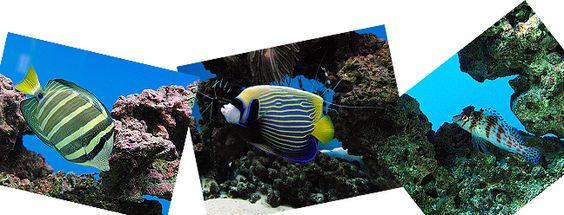 fish-banner