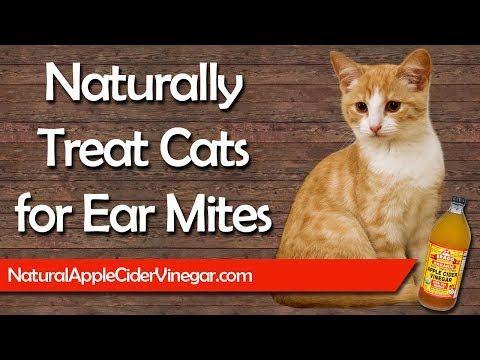 Pin On Cat Ear Mites