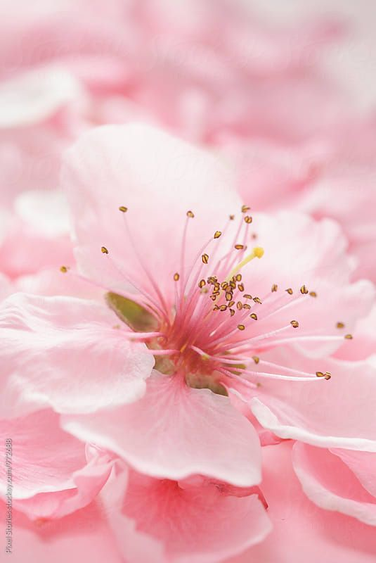 Pink Pretty Pink Blossom Spring Blossom Flowers