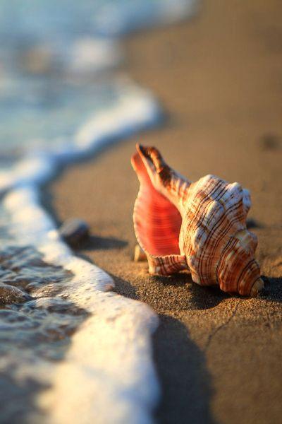 Shell: