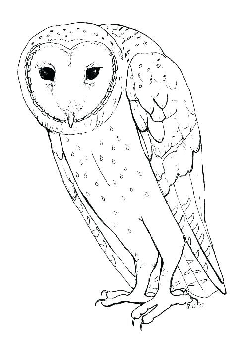 Owl Coloring Pages Pdf Download Free Coloring Sheets Owl Coloring Pages Animal Coloring Pages Owl Printables