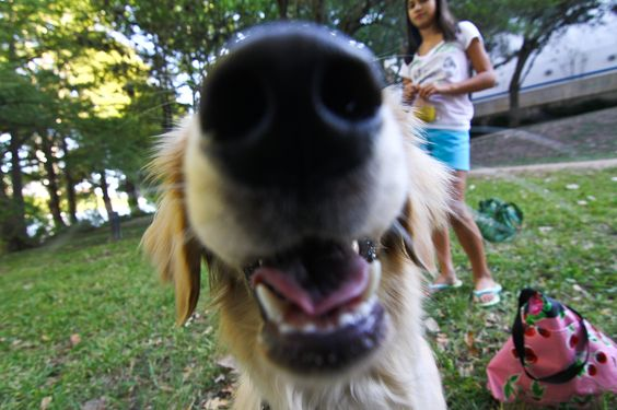 I sensed you have food can you give me some food I love food!   25 Dogs Who Are Unapologetically All Up In Your Business