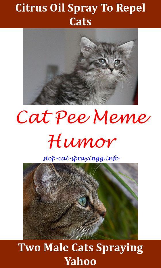 cat urine black light petsmart