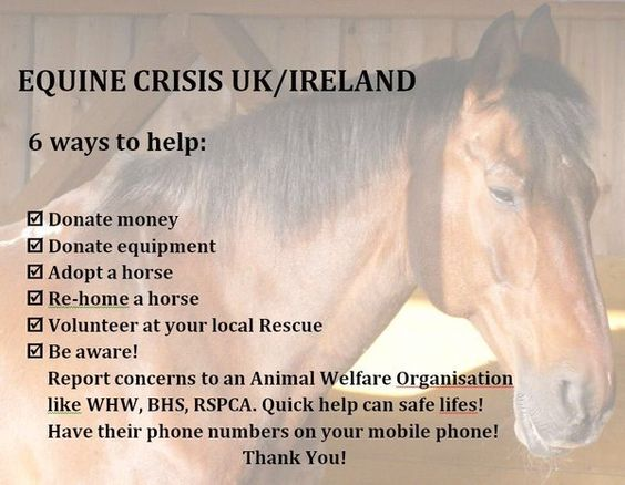 Help Horse Rescues in the UK and Ireland