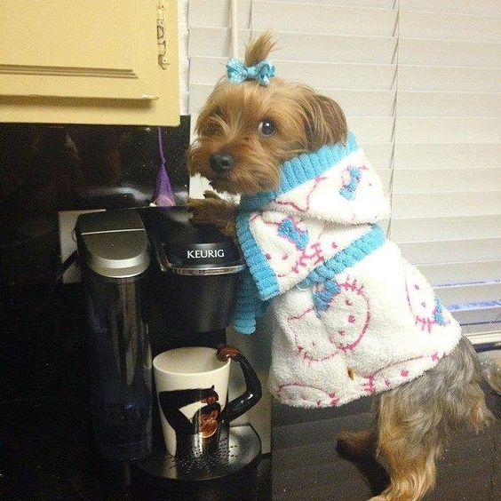 """Do you want the Caramel Latte or the Pumpkin Spice flavor?"" #dogs"