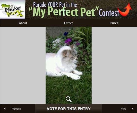 """""""April loves to go out front and sit by the flowers in the garden in the summer"""" - Share your pet's photo for a chance to win a chance to win one of 7 beautiful photo gifts!  Submit their photo here http://www.myperfectpetcontest.com  and for more great ways to showcase your photo memories visit BlanketWorx"""
