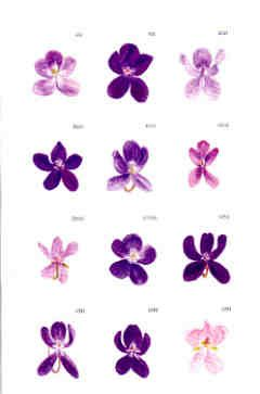 different types of violet