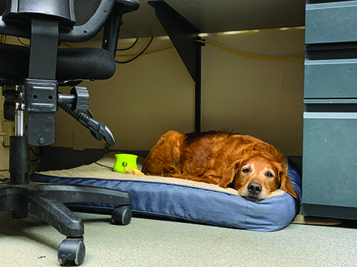Dogs In The Workplace Whole Dog Journal In 2020 Dogs Pet Sitters International Indoor Dog Park