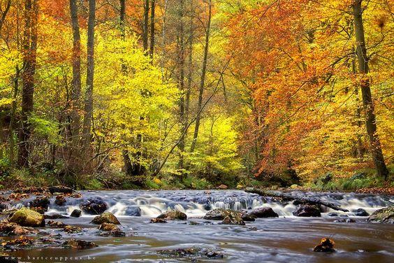 An autumn symphony by Bart Ceuppens, via 500px