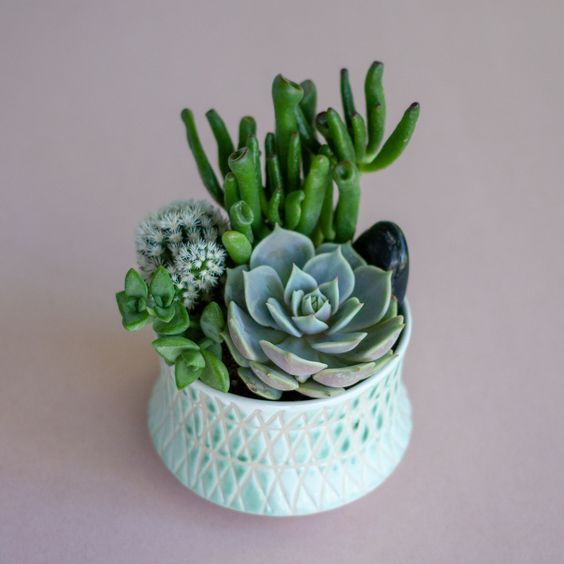 Minted Bowl of Succulents