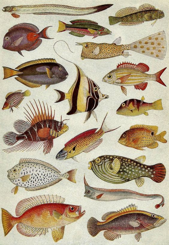 Vintage Illustration C 1930s Tropical Fish Under The