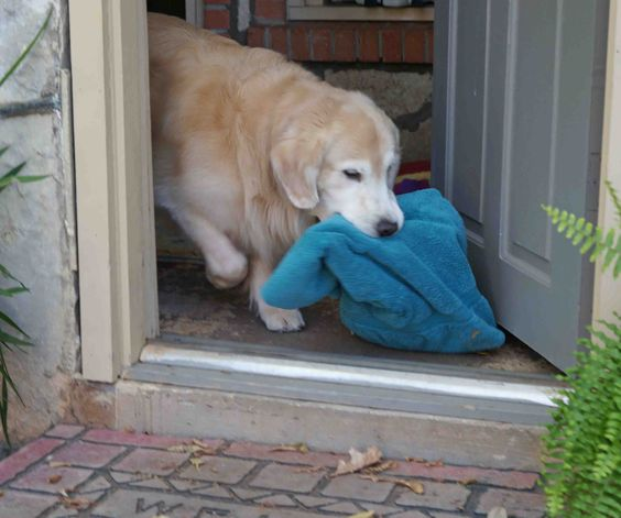 Let's go swimming mom, I've got MY towel.