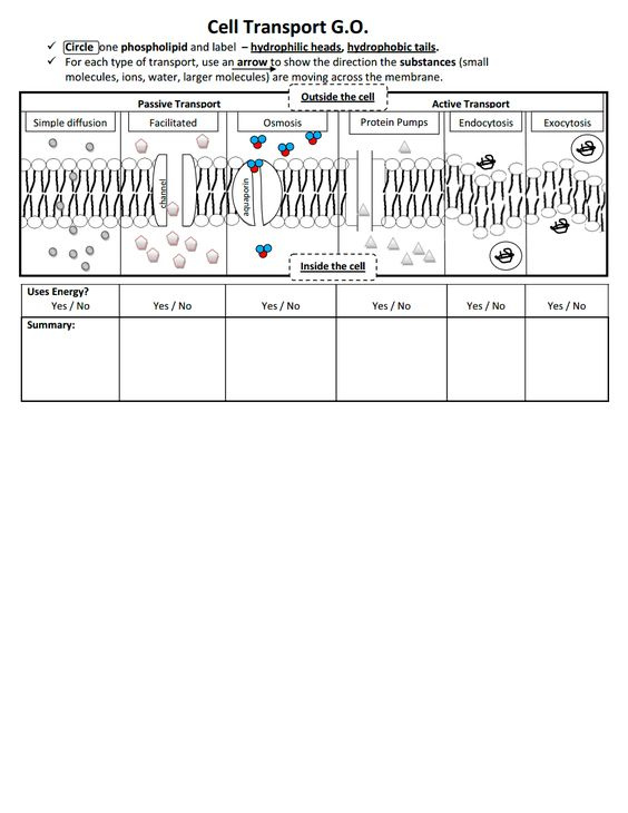 Printables Cell Transport Worksheet go cell transport pdf teacher pinterest pdf