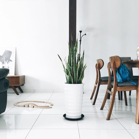 Make a statement in your home by adding a snake plant to your indoor garden collection.