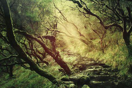 'through darkness & light' von Dirk Wüstenhagen bei artflakes.com als Poster oder Kunstdruck $18.71