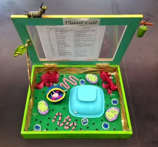 Designed By Youth @ Pollicita Middle School: Animal and Plant cell models by Mr. Lalata's 7th/8th grade students: