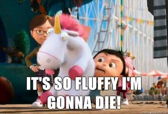 Résultats de recherche d'images pour «gif it's so fluffy»